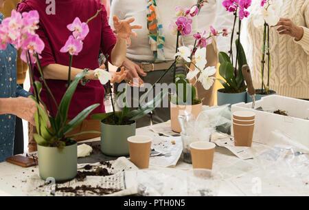 Active seniors enjoying flower arranging class - Stock Image