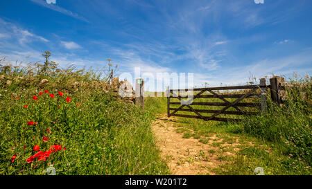 Red Poppies by the Bridleway gate in the Cotswolds - Stock Image