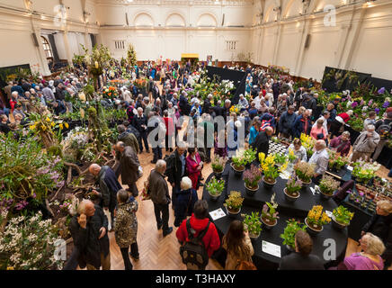 The Royal Horticultural Society Spring Launch and Orchid show at Lindley Hall, London. - Stock Image