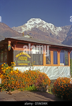 Himalayan View Guest House Chomrong on Annapurna circuit Nepal Himalayas with marigold flowers and Annapurna range - Stock Image