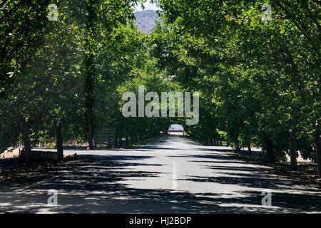 Green Tunnel Santiago do Chile - Stock Image