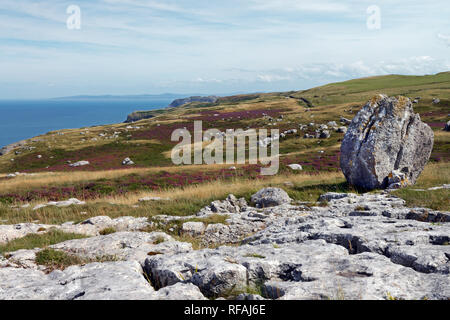 Glacial erratics on the Great Orme headland in North Wales are evidence that the area was covered by a glacier during the last Ice Age. - Stock Image