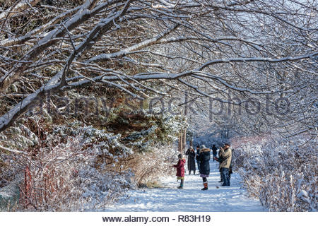 Shinrin yoku walking on the waterfront trail in winter at Lynde Shores Conservation Area in Whitby Ontario Canada - Stock Image