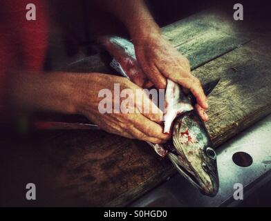 Cleaning fish - Stock Image