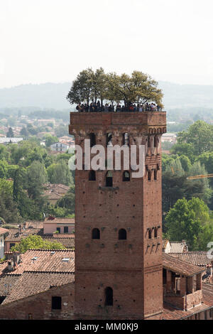 A group of tourists on top of the Torre Guinigi, Lucca, Tuscany, Italy, Europe - Stock Image
