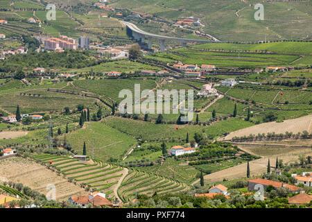 patterns of vines in vineyards in the Alto Douro Port Wine region of Portugal in Summer near the area of Peso da Regua - Stock Image