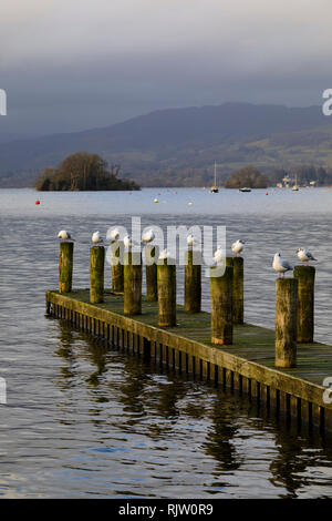 Seagulls sitting on jetty posts, Bowness on Windermere, Lake District, Cumbria, England - Stock Image