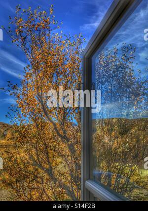 Autumn through the window - Stock Image