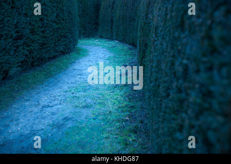 Path in hedge maze - Stock Image
