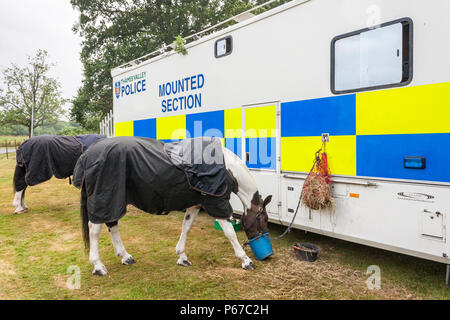 Police horses at rest eating by a police mounted section transport vehicle. - Stock Image