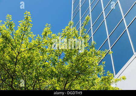 View upwards of modern skyscrapers and office blocks in Lamar Street Houston USA - Stock Image
