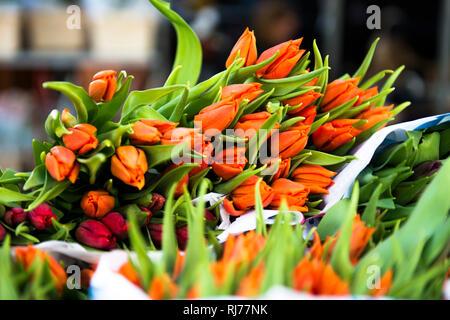 frische Tulpen - Stock Image