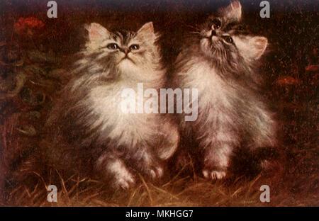 Kittens Looking Skyward - Stock Image