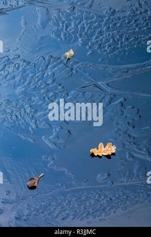 fallen autumn leaves on ice patterns in frozen pool / pond / lake with varied shapes in surface due to differing freeze conditions - Stock Image