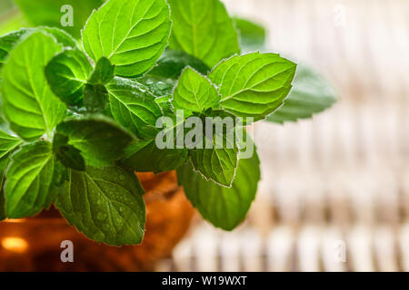 Fresh green organic sprigs of mint. Peppermint. Spicy herbs. Seasoning. Selective focus, copy space - Stock Image