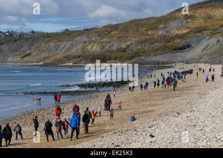 Fossil hunters on beach at Charmouth, Dorset, UK - Stock Image