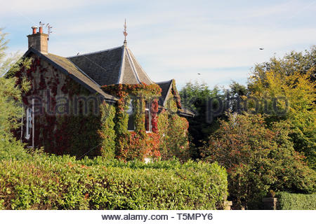 Beautiful House covered in green vine creepers - Stock Image