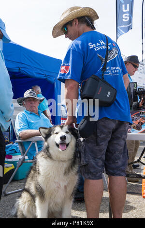 Visitor with dog at Wings and Wheels - Stock Image