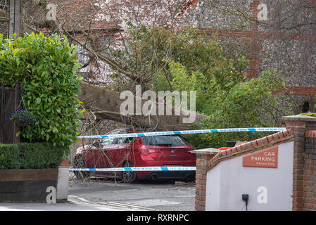Marlow, United Kingdom. 10 March 2019. A tree has fallen during high winds in Marlow, the tree came down across Mill Road and came to rest on the roof of the Prince of Wales pub. Credit: Peter Manning/Alamy Live News - Stock Image