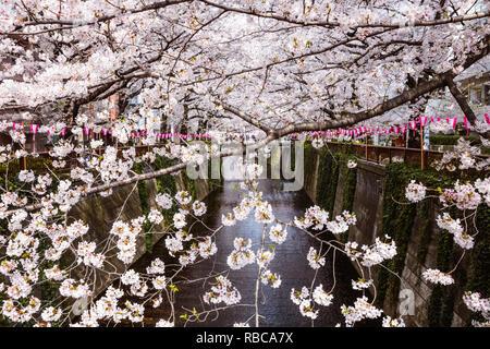 Cherry blossom season, Naka Meguro, Tokyo, Japan - Stock Image