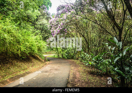 footpath between trees in  green dark forest of a park in Sao Paulo, Brazil - Stock Image