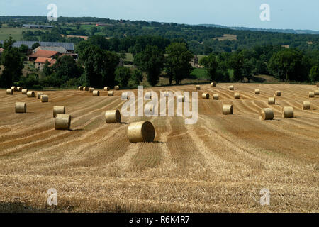 Haymaking in France. Stocking up for winter. - Stock Image