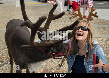 Anchorage, Alaska. 4th July, 2018. A women wearing antlers is licked by Star the Reindeer during the annual Independence Day parade July 4, 2018 in Anchorage, Alaska. Credit: Planetpix/Alamy Live News - Stock Image
