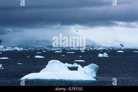 Blue floating ice and moody sky Portal Point Antarctic Peninsula Antarctica - Stock Image