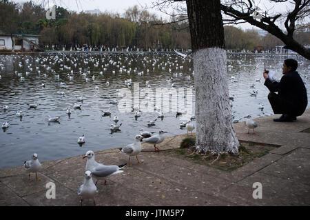 Seagull - Stock Image
