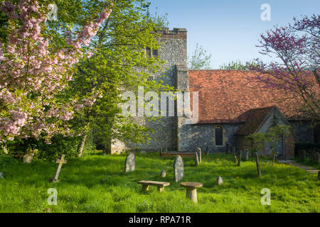 The Church of St. Mary, Turville with cherry blossom in Spring. - Stock Image