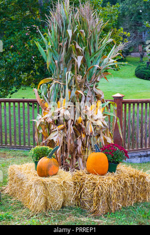 JONESBOROUGH, TN, USA-9/29/18:  A colorful Thanksgiving display with cornstalks, chrysanthemums, pumpkins, and hay bales. - Stock Image