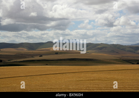 Scenery and Langeberg Mountain Range Overlooking Rolling Wheatlands Near Cape Town, South Africa - Stock Image