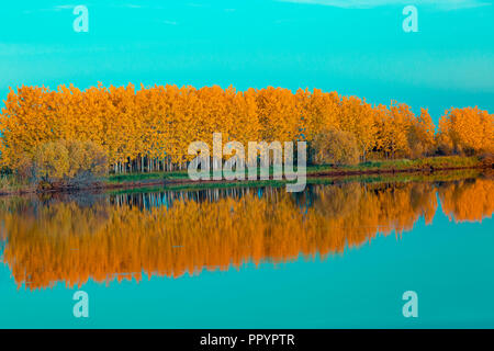 Autumn deciduous forest in bright orange tones and gently aquamarine sky reflects on the water surface - Stock Image