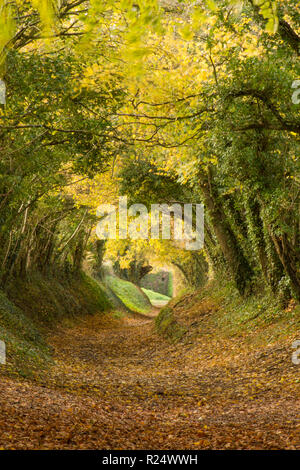 Tree tunnel, avenue, sunken lane, path, Halnaker, Sussex, UK. November, on path leading up to Halnaker windmill, Autumn, fall. - Stock Image