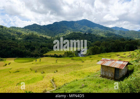 A hut overlooking verdant rice fields near Ende, Flores Island (East NUsa Tenggara), Indonesia. - Stock Image