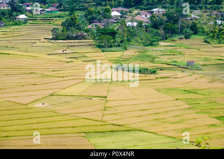 Spider web rice fields ('lingko') in Cancar Village, near Ruteng, Manggarai Regency, island of Flores (East Nussa Tenggara), Indonesia. - Stock Image