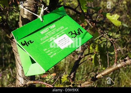 Insect trap box attached to a tree in the Crex Meadows Wildlife Area in western Wisconsin, USA. - Stock Image