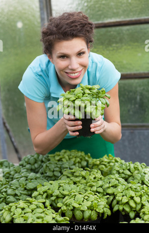 young woman in greenhouse with basil - Stock Image