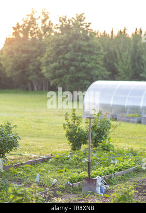 A shovel in a garden with a greenhouse in the background during sunset - Stock Image