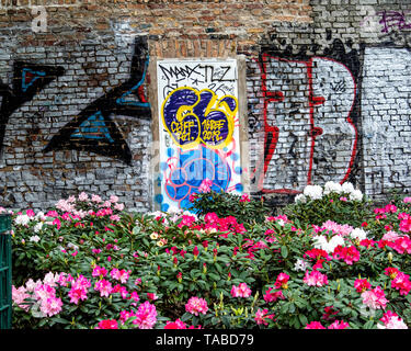 Spring flowering Rhododendrons and graffiti on old weathered wall In Public park. Volkspark am Weingbergsweg, Mitte, Berlin - Stock Image