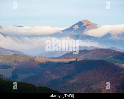 Forest in winter, Gubbio, Umbria, Italy, Europe - Stock Image