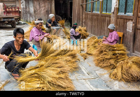 Dong people sorting straw to make rope in the village, Huanggang, Zhaoxing, Guizhou Province, China - Stock Image