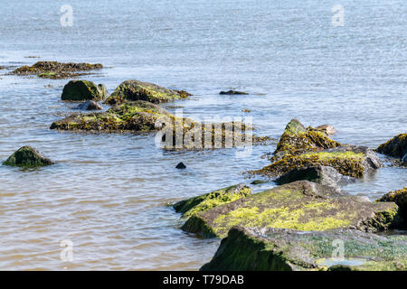 Seaweed and costal rock defences near to the sand beach at Clacton on Sea, Essex, UK - Stock Image