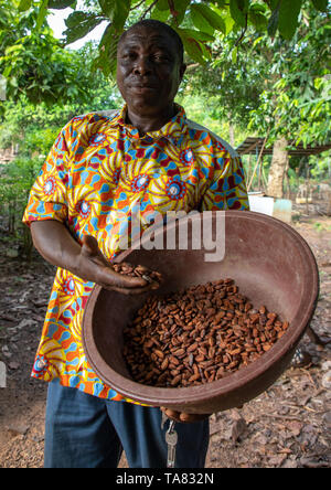 African man with dried cocoa beans, Région des Lacs, Yamoussoukro, Ivory Coast - Stock Image