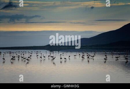 Morning dawn landscape of flamingos in Lake Natron. Kenya. - Stock Image