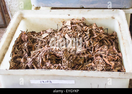 Raw tobacco leaves to produce cigars for tourists in La Palma. - Stock Image