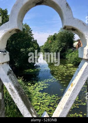 River Leam, with lilly pads and reeds, viewed from bridge. - Stock Image