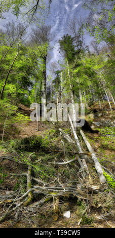 DE - BAVARIA: Reviving forest after the storm of 11 March 2019 at the Schlosswald near Lenggries - Stock Image