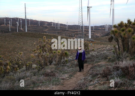 Hiker on Pacific Crest Trail with windmills Tehachapi California - Stock Image