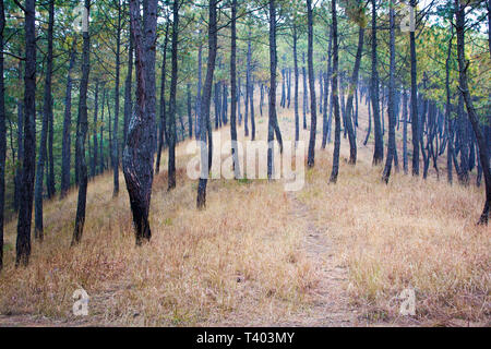 Hills, trees, pine forest and himalayas in remote area of Nepal - Stock Image